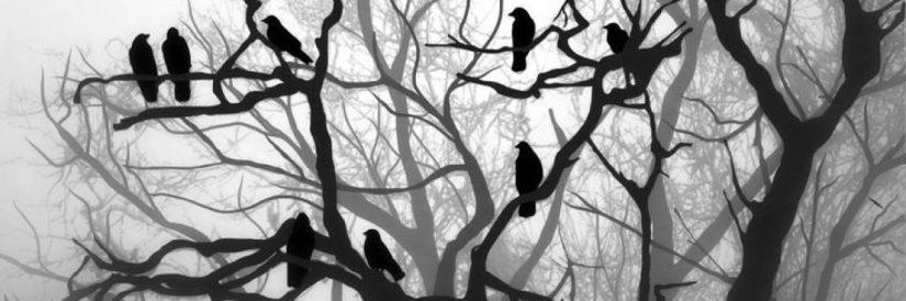 cropped-crows.jpg